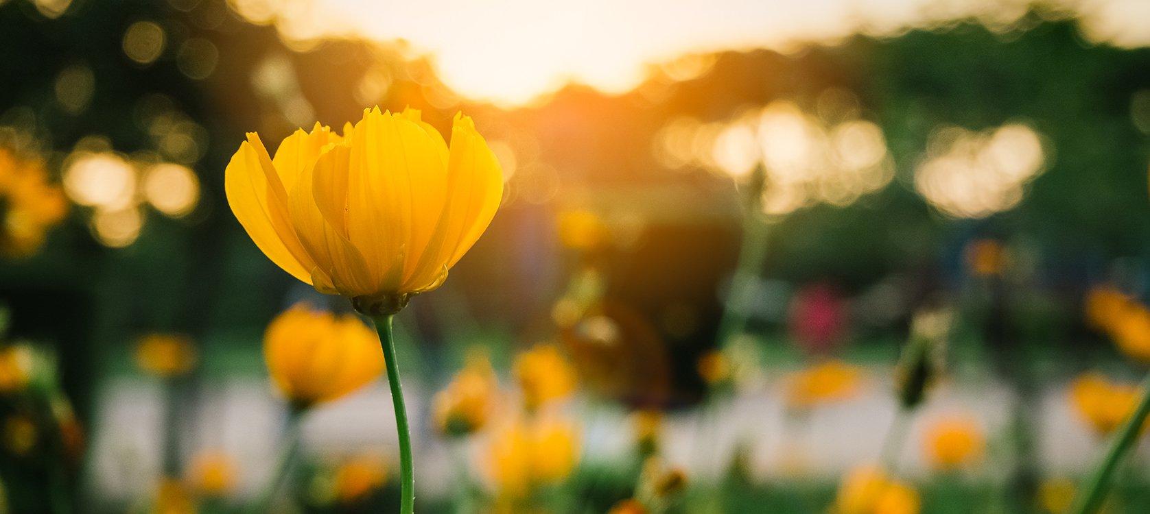 Spring PLC.jpg